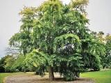 یہ درخت انتہائی نامناسب ماحول میں بھی اپنی افزائش جاری رکھتا ہے ۔ فوٹو : فائل
