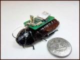سائبرحشرات کے ذریعے ملبے میں دبے ہوئے انسانوں کی جانیں بھی بچائی جاسکتی ہیں، فوٹو:فائل