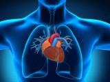 چوہوں پر کئے گئے کامیاب تجربات کے بعد دلوں کی مرہم پٹی کے لیے زندہ خلیات کی پرتین تیار کرنے کا کامیاب تجربہ کیا گیا ہے۔ فوٹو: فائل