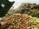 اقوامِ متحدہ کے مطابق فصل کی کٹائی اور کھیتوں میں ہی 60 کروڑ ٹن خوراک ضائع ہوجاتی ہے، فوٹو:فائل