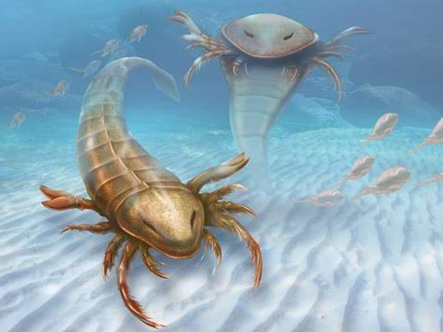 ماہرین کے مطابق اب سے 46 کروڑ سال قبل سمندر ان بچھوؤں سے بھرے ہوئے تھے جن کی لمبائی 1.7 میٹر تھی۔