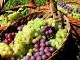 انگور میں شامل اہم اجزا جیسے آئرن ، کاپر اور مینگنیز جسم میں خون کی کمی کو دور کرنے میں معاون ثابت ہوتے ہیں۔۔ فوٹو : فائل