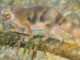 آج سے ایک کروڑ 80 لاکھ سال قبل پائے جانے والے شیر کی نسل کے اس جانور 'مائیکرولیو' کی جسامت ایک بلی سے بھی کم تھی۔  فوٹو: بشکریہ یونیورسٹی آف نیو ساؤتھ ویلز