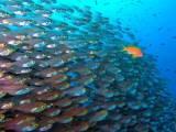 ماہرین ماحولیات نے دریافت کیا ہے کہ صبح سویرے پانی میں مچھلیاں بھی چہچہانے جیسی آوازیں نکالتی ہیں۔ فوٹو؛ فائل