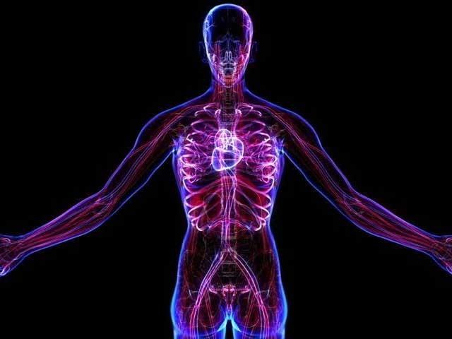 انسانی جسم میں نئی شناخت رکھنے والا یہ عضو معدے اور آنتوں سے جڑا ہوتا ہے۔فوٹو؛ فائل