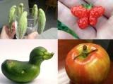 دنیا بھر کے کسانوں اور عام افراد نے عجیب و غریب اشکال والی سبزیاں اور پھلوں کی تصاویر شیئر کی ہیں۔ فوٹو: فائل