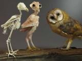 کچھ لوگوں کی رائے میں صرف تجسس کی تسکین کےلئے معصوم پرندے کو گنجا کردینا سراسر ظلم ہے۔ (تصویر: ٹوئٹر)