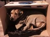 استنبول کی خون جمادینے والی سردی میں ایک کتا کارڈ باکس میں سکون سے بیٹھا ہے۔ فوٹو: بشکریہ بورڈ پانڈا
