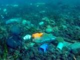 آلودگی ہمارے سمندروں کے فرش تک پہنچ کر وہاں حیات کو نقصان پہنچارہی ہے، تحقیقی رپورٹ، فوٹو؛ فائل