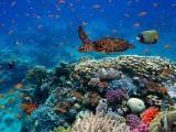 سمندروں میں آکسیجن کی مقدار کم ہوئی ہے اور اس سے نازک نظامِ زندگی متاثر ہوسکتا ہے۔ فوٹو: فائل