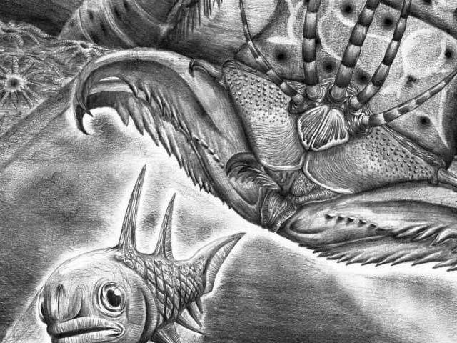 ویبسٹرپرائن آرمسٹرانگائی اب سے 40 کروڑ سال قبل زمین پر موجود تھا اور مچھلیوں اور آکٹوپس کا شکار کیا کرتا تھا۔ فوٹو: بشکریہ رائل اونٹاریو میوزیم