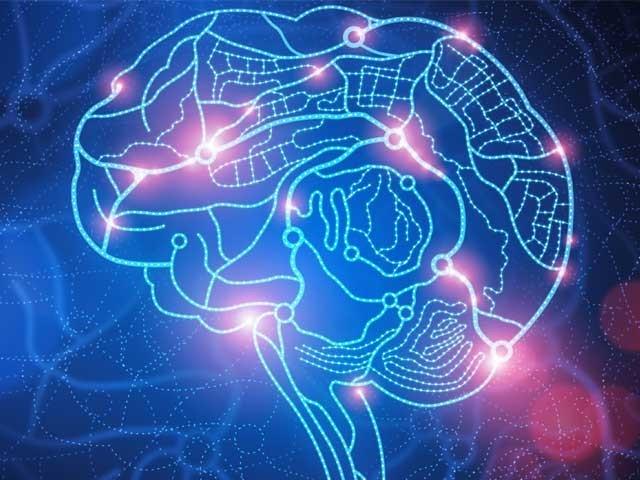 دماغ کا سرکٹ نہ صرف پیچیدہ ہے بلکہ اس کے خلیات کی نت نئی صلاحیتیں آج ہمارے سامنے آرہی ہیں، رپورٹ فوٹو؛ فائل