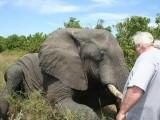 جنگلی ہاتھی نے کم ترین نیند لینے میں گھوڑے اور گدھے تک کو بہت پیچھے چھوڑتے ہوئے ایک نیا ریکارڈ بنالیا ہے، فوٹو؛ فائل