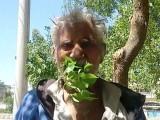گوجرانوالہ کے رہائشی محمود بٹ پتے کھانے کے باوجود کسی بیماری کا شکار نہیں ہوئے