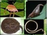 سائنسدانوں نے ہیری پوٹر کی ٹوپی جیسی مکڑی اور گلابی پتے جیسے کیڑے سمیت کئی جاندار دریافت کئے ہیں۔ فوٹو: فائل