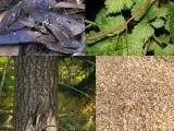 شکاریوں اور حملہ آوروں کی نظر سے بچنے کےلیے جانور کیموفلاج نامی قدرتی تدبیر اختیار کرتے ہیں۔ (فوٹو: فائل)