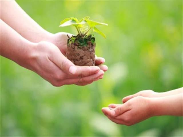 آئیے آگے بڑھیں اور اِس سال اپنے نام کا ایک پودا لگا ہی دیں، اگر وہ پودا مرجھا جائے تو اُس کی جگہ ایک اور پودا لگائیں، جب تک زندہ ہیں اپنے حصے کے پودے کو مرنے نہ دیں۔