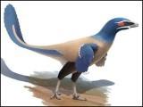 نئے دریافت ہونے والے پرندے کو البرٹا ونیٹر کا نام دیا گیا ہے۔ فوٹو: رائل میوزیم کینیڈا