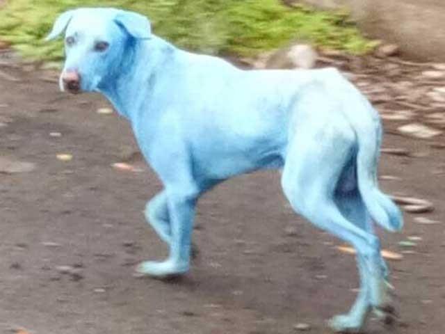 بدترین صنعتی آلودگی کی وجہ سے ممبئی کے کتے بھی نیلے پڑنے لگے ہیں۔ (فوٹو: انٹرنیٹ)