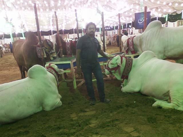 ہمیں پورا سال مویشی منڈی لگنے کا انتظار رہتا ہے، منڈی آنیوالے شہریوں کی گفتگو
