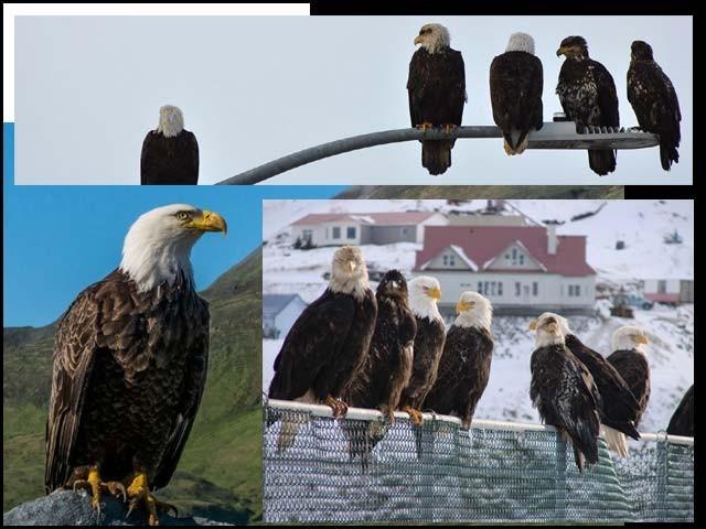 ساحلی قصبے میں نایاب نسل کے پرندے بڑی تعداد میں پائے جاتے ہیں۔   فوٹو : فائل