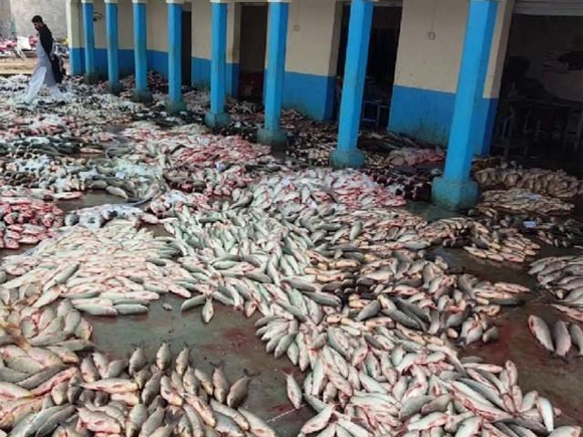 مورخین کے مطابق کراچی میں کوئی تجارتی مرکز نہیں تھا اور شہر کی بیشتر آبادی جو کہ مچھیروں پر مشتمل تھی اُن کی محنت مشقت سے پکڑی گئی مچھلیاں اکثر و بیشتر گل سڑ جایا کرتی تھیں۔ فوٹو:فائل