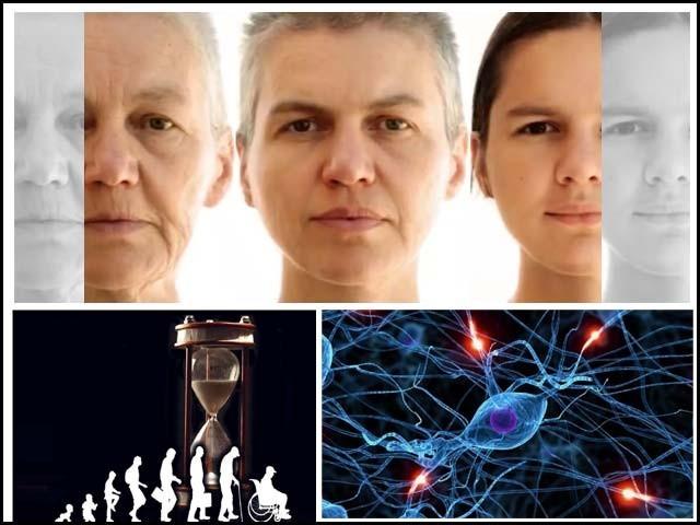 انسان کے جسم میں خلیوں کی دو سو سے زائد اقسام پائی جاتی ہیں۔ فوٹو : فائل