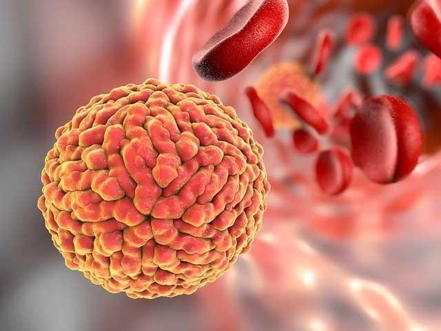 ترمیم شدہ زیکا وائرس نے تجربات کے دوران دماغ میں سرطان زدہ کو بڑی کامیابی کے ساتھ جڑ سے اکھاڑ پھینکا۔ (فوٹو: فائل)