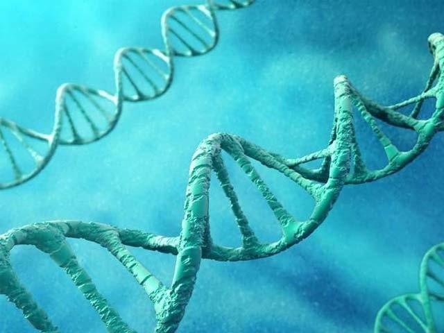 کم کیلیوریز والی غذا کھانے سے ڈی این اے میں تبدیلیاں پیدا ہوتی ہے جو اوسط عمر میں اضافے کی وجہ بنتی ہیں۔ فوٹو: فائل