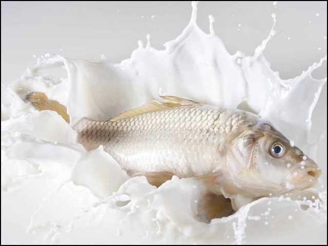 مچھلی اور دودھ، دونوں ہی پروٹین سے بھرپور غذائیں ہیں جنہیں ایک ہضم کرنا ہمارے نظام ہاضمہ پر دوہری مشقت بن جاتا ہے۔ (فوٹو: فائل)
