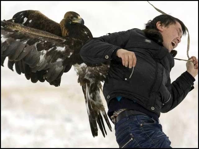 چیل کسی انسان پر ایک بار جھپٹنے کے بعد بار بار اسی شخص پر حملے کرتی ہے۔ فوٹو: فائل