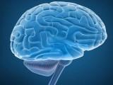 ہفتے میں ایک یا دو دن کا روزہ خطرناک دماغی امراض کو بھی روکتا ہے۔ فوٹو: فائل