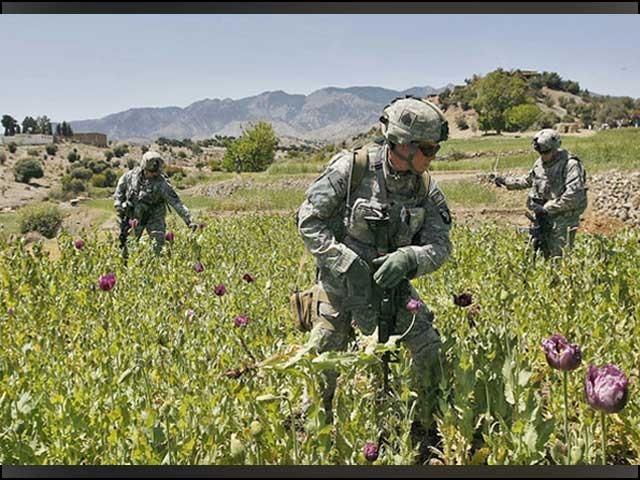 طالبان کی حکومت نے افیون اور ہیروئن کی کاشت پر سخت پابندی عائد کردی تھی۔ فوٹو: انٹرنیٹ