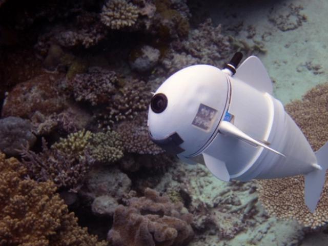 دنیا کی پہلی سوفٹ روبوٹک فش کو امریکی سائنس دانوں نے SoFi کا نام دیا ہے۔ فوٹو : ایم آئی ٹی