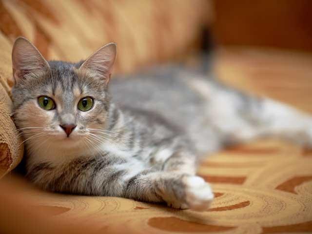 اگر انسان بغور مشاہدہ کرنے کا عادی ہو تو بلی جیسا معمولی پالتو جانور بھی بہت مفید ہے۔ (فوٹو: انٹرنیٹ)