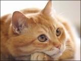 قیدیوں کو موبائل فون پہنچانے کے لیے بلی کو خصوصی تربیت دی گئی تھی۔ فوٹو : فائل