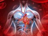 ایک قسم کا اینٹی آکسیڈنٹ خون کی رگوں کو پھر سے جوان کرنے کی بھرپور صلاحیت رکھتا ہے۔ (فوٹو: فائل)