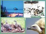 اس قصبے کے گنجے عقاب اپنے گھونسلوں کی حفاظت بڑے خوف ناک انداز سے کرتے ہیں۔ فوٹو : فائل