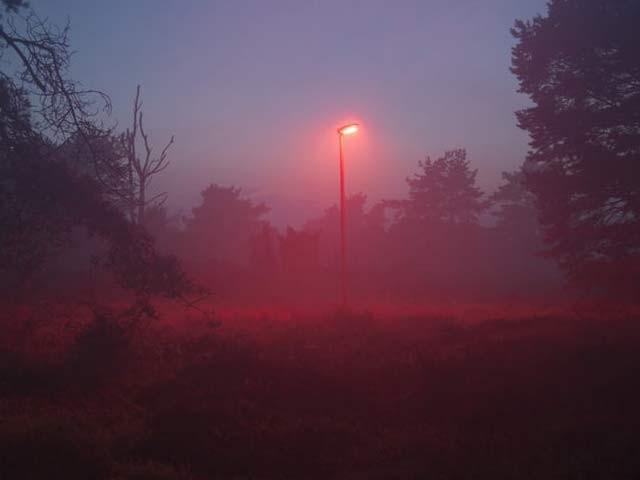 ڈنمارک کے ایک شہر میں چمگادڑوں کے لیے سرخ اسٹریٹ لائٹس لگائی گئی ہیں۔ فوٹو: نیواٹلس