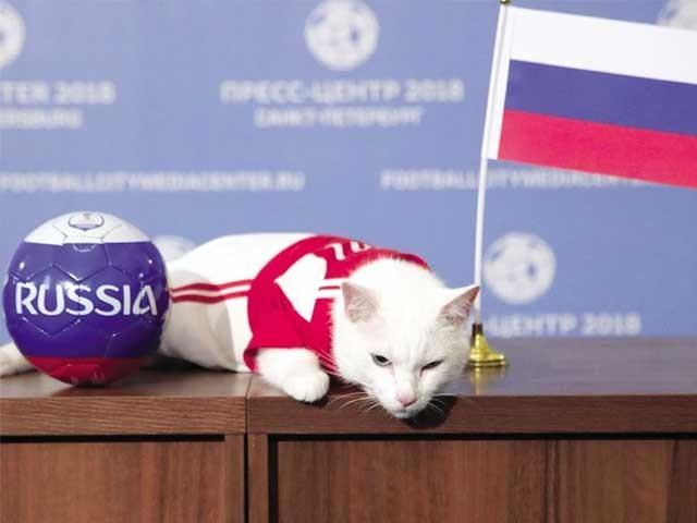 ایشلیس نامی بلی کو خاص طور پر ورلڈ کپ میچز کیلیے پیشگوئی کی تربیت دی گئی ہے۔ فوٹو: سوشل میڈیا