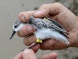 ٹیکنالوجی کے ذریعے جنگلی جانوروں و پرندوں کی ٹریکنگ کا حصول بھی ممکن ہوگا فوٹو: فائل