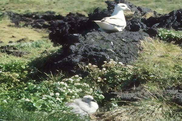 Surtsey 10