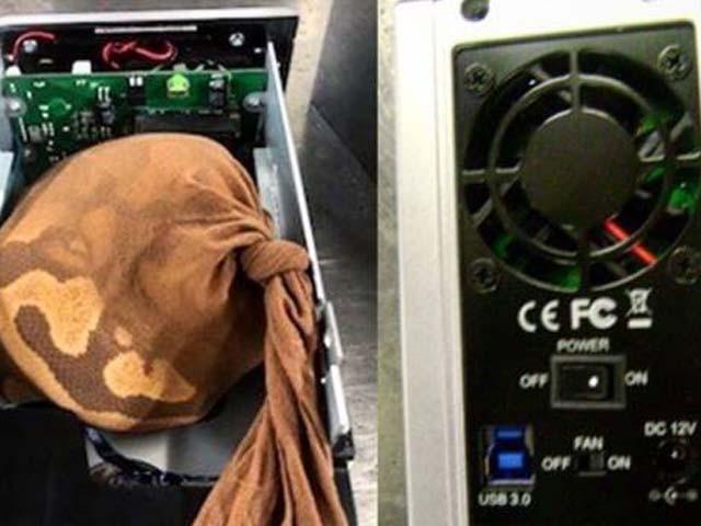 مسافر نے اژدھے کو تھیلی میں بند کرکے ہارڈ ڈسک میں چھپایا ہوا تھا۔ فوٹو : فائل