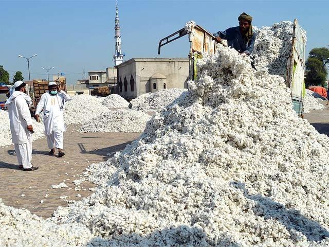 ڈالر کی قدر بڑھنے اورڈیوٹی سے روئی کی قیمتیں7سال کی بلندسطح پرپہنچ گئیں،احسان الحق۔  فوٹو: اے پی پی/فائل