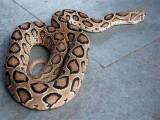 سانپوں کی موجودگی سے اساتذہ اور بچوں میں کھلبلی مچ گئی ( فوٹو: فائل)