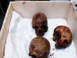تابوت سے فرعون کے دور کے تین سپاہیوں کے ڈھانچے برآمد ہوئے ہیں (فوٹو: مصری میڈیا)