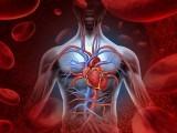 بی ٹا ہائیڈروکسی بیوٹائریٹ مالیکیول جسم میں فاقے کے دوران بنتا ہے جو خون کی رگوں کو جوان رکھتا ہے۔ (فوٹو: فائل)