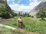 سکسا گاؤں میں ایک مقامی خاتون نئی پائپ لائن سے ممکن ہونے والی زراعت کے بعد ایک سرسبز کھیت کے پاس موجود ہیں۔ تصویر: تھامسن رائٹرز فاؤنڈیشن، رائنا سعید خان