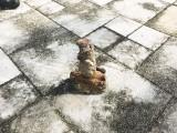 فلوریڈا میں ویرو بیچ کے ایک باغ سے دوسری عالمی جنگ کا بم برآمد ہوا ہے۔ فوٹو: بشکریہ ٹی سی پام ویب سائٹ