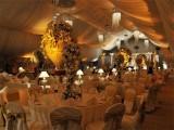 شادی ہال میں تقریبات ہر صورت رات 12 بجے ختم کر دی جائیں گی، ،فوٹو: فائل